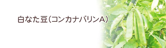 白なた豆(コンカナバリンA)