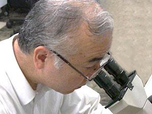 前立腺がん治療を効率良く行うための低分子フコイダン