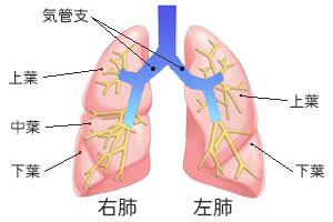 肺がん治療の現状と課題