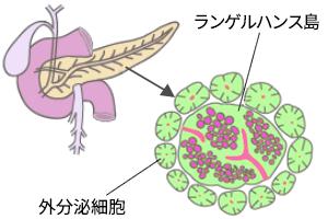 神経内分泌腫瘍(神経内分泌がん)